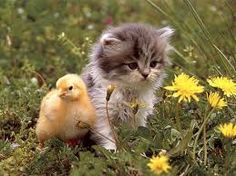 Kitten pictures and images. Discuss cat food, medicine and supplies on our forum. Cute Little Kittens, Cute Kittens, Baby Kittens, Cats And Kittens, Spring Animals, Baby Animals, Cute Animals, Miaou Miaou, Grumpy Cat Meme