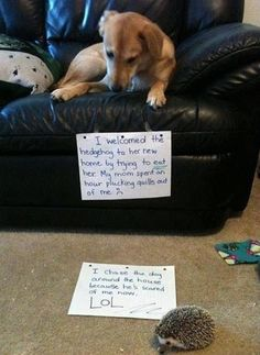 Dog = sad. Hedgehog = LOL