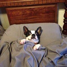 7 photos de chiens surpris par leurs maîtres en plein acte (d'amour et de…