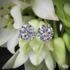 "Twinkle twinkle little stars....    This 0.808 ct H SI1 A CUT ABOVE® Hearts and Arrows Diamond and 0.806 ct G SI1 Expert Selection Round Cut Loose Diamond come together to create a spectacular pair of 14k White Gold 3 prong ""Martini"" Diamond earrings."