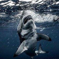 36 Awesome Pics You Don't Want to Miss - Funny Gallery Happy Shark, Big Shark, Shark Art, Shark Pictures, Shark Photos, Great White Shark Attack, Animals Beautiful, Cute Animals, Shark Silhouette