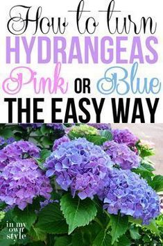 How to turn hydrangeas pink or blue the easy way. A great gardening tip by In My Own Style How to turn hydrangeas pink or blue the easy way. A great gardening tip by In My Own Style Plants, Garden, Lawn And Garden, Backyard Garden, Hydrangea Garden, Outdoor Gardens, Outdoor Plants, Garden Landscaping, Gardening Tips
