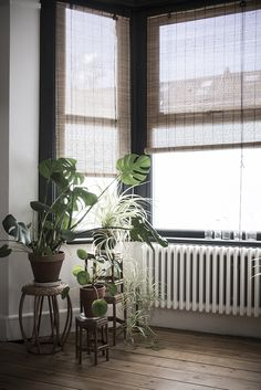 bare floorboards bay window roller blinds with plants