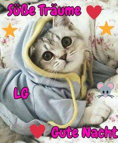 Animals And Pets, Cute Animals, Bedtime, Good Night, Haha, Happy Birthday, Disney, Relax, Smileys