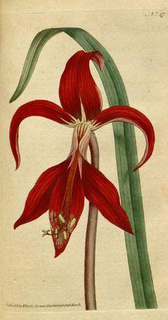 Botanical poster Botanic illustration Print set by mapsandposters, $8.88