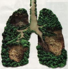 The Amazon Rainforest are considered the lungs of the Earth.