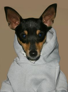 Hoodie, it's cold you know?