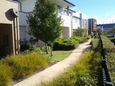 Showhome Entry walkway
