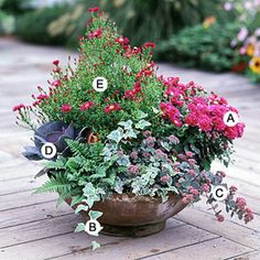 Love The Palm Large Container Garden Container Gardens Pinterest Gardens Decks And A House