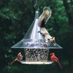 Simple Bird Houses Diy Butterfly Feeder Ideas For 2019 Wild Bird Feeders, Diy Bird Feeder, Bird House Feeder, Anti Squirrel Bird Feeder, Squirrel Repellant, Funny Bird, Butterfly Feeder, Diy Butterfly, Easy Bird