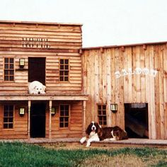 Special dog house for this Springer Spaniel . . .
