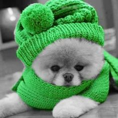 touch of green dog hat Color Splash, Color Pop, Splash Art, Black Splash, Cute Puppies, Cute Dogs, Dogs And Puppies, Doggies, Baby Animals