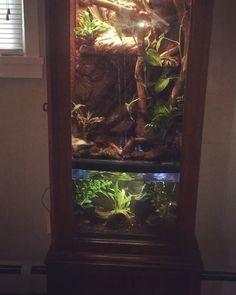Reptile Habitat, Reptile Room, Reptile House, Reptile Cage, Frog Habitat, Bartagamen Terrarium, Tree Frog Terrarium, Chameleon Terrarium, Lizard Terrarium