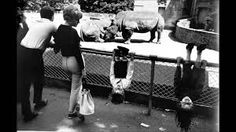 Garry Winogrand, Children at Zoo, c. Insect Photography, History Of Photography, City Photography, Creative Photography, Animal Photography, People Photography, Photography Tutorials, Digital Photography, Landscape Photography