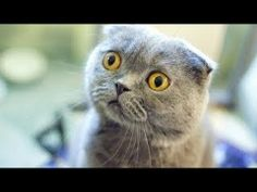 funny cats compilation 2014, funny cat videos,funny animals,funny video,cats funny videos,funny cats HD http://www.youtube.com/watch?v=eeVuupko7dY