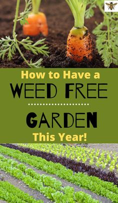 How to Have a Weed-Free Garden This Year : Weed-free gardening is possible! Check out these tips and tricks to make your garden as weed-free as possible! Amazing Gardens, Beautiful Gardens, Potager Palettes, Olive Garden, Seed Germination, Garden Weeds, Garden Plants, Organic Gardening Tips, Vegetable Gardening