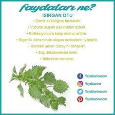 #ısırgan otu #ısırgan otunun faydaları #faydaları #zararları #faydalarıne #faydalarine