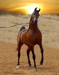 Resultado de imagem para cavalos lindos