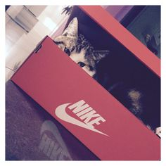 #nike #kitten #surprise