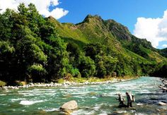 fly fishing for trout, Nelson, South Island, New Zealand