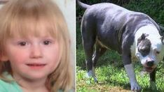 Toddler Went Missing For 2 Days, Found Protected By A Hero Pit Bull! - Best News Women Names, Bad Feeling, 2 Year Olds, In The Flesh, Girl Names, Pet Store, Dog Walking, Penne, Kentucky