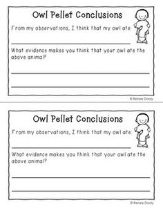 owl pellet report essay example Some basics on apa requirements for my class, paper is from purdue owl website @ .