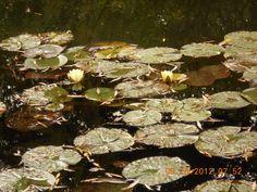 Water lilies at Monet's garden