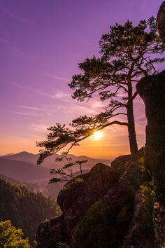 Superb Nature, wowtastic-nature:    Beautiful Black Forrest...