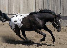 Bills Image, of Dream Catcher Equines