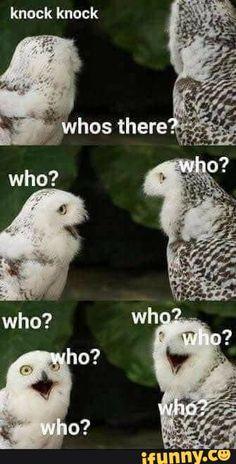 20 Tier-Meme, die dich härter lachen lassen, als sie es wahrscheinlich sollten … 20 animal memes that make you laugh harder than they probably should – # Funny Owls, Cute Funny Animals, Funny Cute, Hilarious, Funny Laugh, Memes Humor, Cat Memes, Funny Memes, Owl Meme