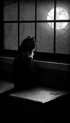 cat looking out at the full moon...