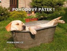 The Labrador Site - Yellow Lab Relaxing in the Tub Cute Puppies, Cute Dogs, Dogs And Puppies, Funny Dogs, Funny Animals, Cute Animals, Dog Rules, Tier Fotos, Doge