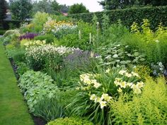 garden in Holland