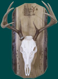 European Skull Mount Taxidermy Bracket Fits Elk and other large animals Cherry