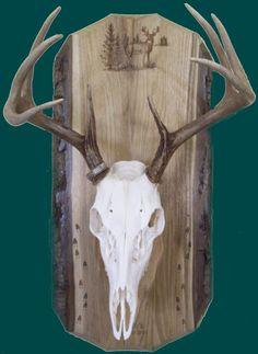 european plaque template - pics for european skull mount plaque