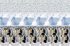 Animals Stereogram Gallery : Emperor Penguines : Stereogram Images, Games, Video and Software. All Free! 3d Hidden Pictures, Magic Eye Pictures, Hidden Images, 3d Pictures, 3d Stereograms, 3d Maze, Eye Illusions, Image 3d, Gravitational Waves