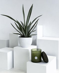 Nothing beats White Amaryllis and Rosemary Beats, Planter Pots, Fragrance, Urban, Instagram Posts, Collection, Perfume