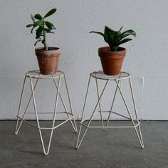 plant stands!