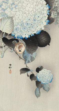 Koson Ohara (1877-1945). Birds amongst hydrangea.  345 x 185mm.  Original woodblock print, Japan, c.1930.  link