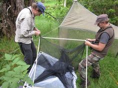Biologists assemble an aerial malaise trap
