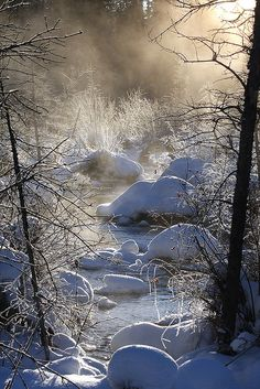 ~ Living a Beautiful Life ~ The Mists of McIntyre Marsh (by Hank Moorlag) Winter Szenen, I Love Winter, Winter Magic, Winter Picture, Winter Trees, I Love Snow, All Nature, Amazing Nature, Snow Scenes