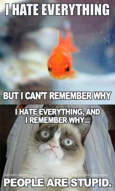 18 Times Grumpy Cat Said Exactly What He Thinks Of Stupid People - Funny Cat Quotes Grumpy Cat Quotes, Funny Grumpy Cat Memes, Funny Cats, Funny Jokes, Cats Humor, Grumpy Cat Images, Dumb Cats, Hilarious, Fat Cats
