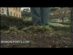 http://www.romereports.com/palio/el-escudo-de-benedicto-xvi-retirado-de-la-parcela-de-los-jardines-vaticanos-spanish-9284.html#.UTi0Axwz3dI El escudo de Benedicto XVI retirado de la parcela de los Jardines Vaticanos
