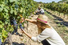 Bodegas Torres ofrece la 'Mejor experiencia enoturística' según Drinks International