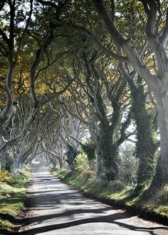 The Tangled Wood  Ireland Landscape Photography  by ScottKrycia