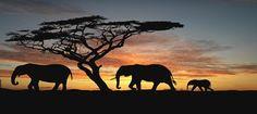 Safari Kenia Madoadoa