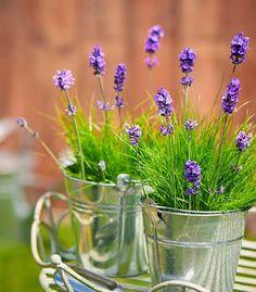 Amo flores e cores!  Simplesmente lindas!                                                                                                   ...