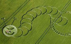 Alien caterpillar!!! A crop circle design which bears a resemblance to The Very Hungry Caterpillar  has appeared in a field at Boreham Woods, nr Lockeridge, Wiltshire