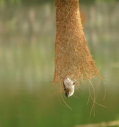 so cool, he's building his nest