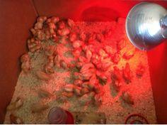 Heritage Kirk Farm, LLC: News From the Farm: Our First Farm Blog Post